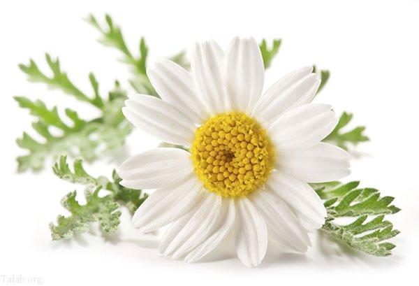 بهترین گیاهان دارویی برای درمان استرس و اضطراب