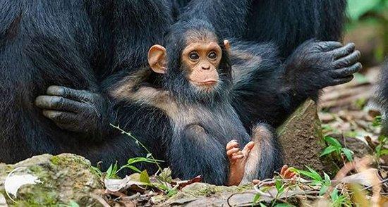 عکس هایی دیدنی از عشق مادری در حیوانات (عشق در حیوانات)