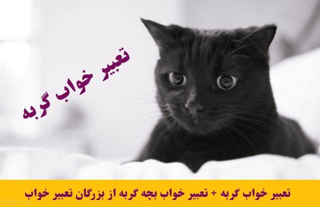 تعبیر خواب گربه + تعبیر خواب بچه گربه از بزرگان تعبیر خواب