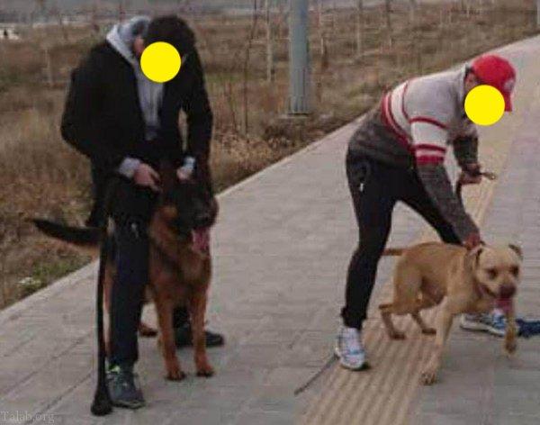 در حاشیه حمله سگ به یک خانواده در لواسان (حمله به دختر 10 ساله)