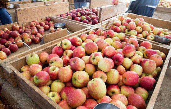 10 خوراکی مفید برای افزایش هوش | افزایش هوش با این مواد غذایی
