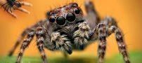 تعبیر خواب عنکبوت + تعبیر خواب تار عنکبوت از بزرگان