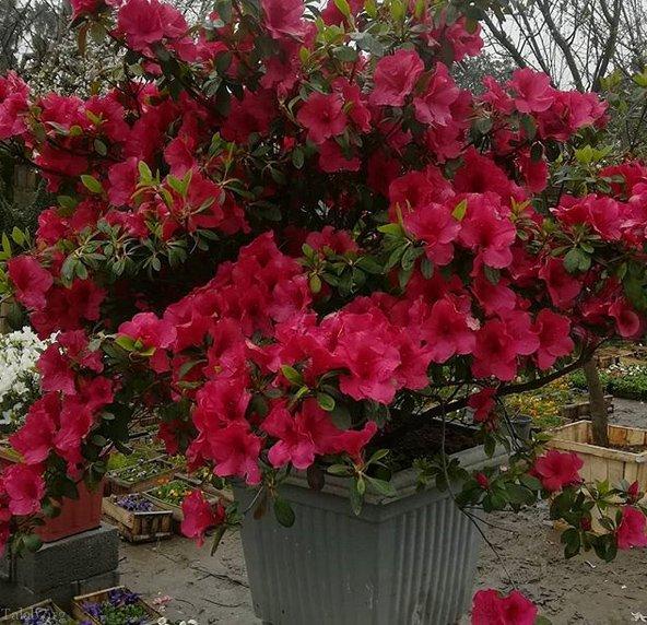شعرهای زیبای بهار و نوروز | شعرهای شاعران مشهور جهان درمورد بهار