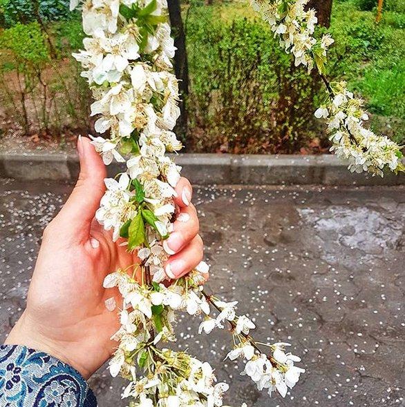 شعر تبریک بهار | اشعار زیبای بهاری و عید نوروز