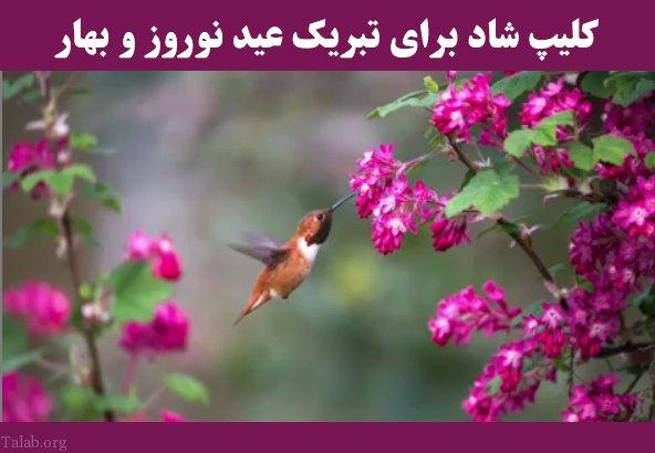 کلیپ شاد برای تبریک عید نوروز و بهار (عیدتون مبارک)