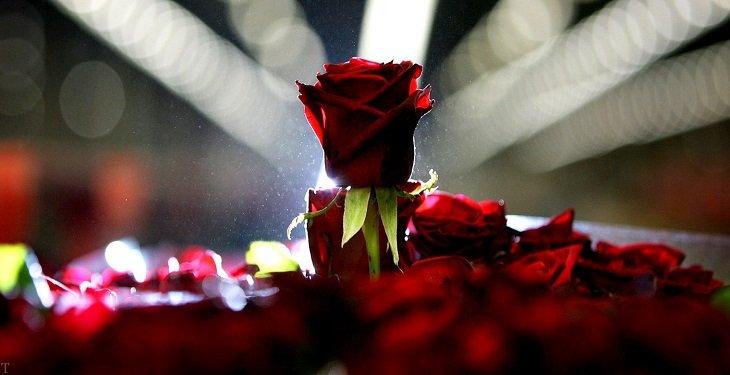 8 دلیل برای نیاز انسان به شعر و شاعری