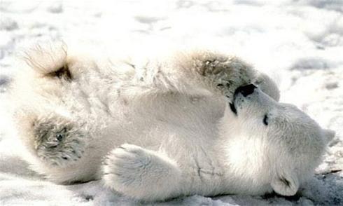 عکس های زیباترین حیوانات در حال انقراض در جهان
