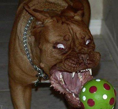 عکس های خنده دار و طنز با موضوع حیوانات (98)