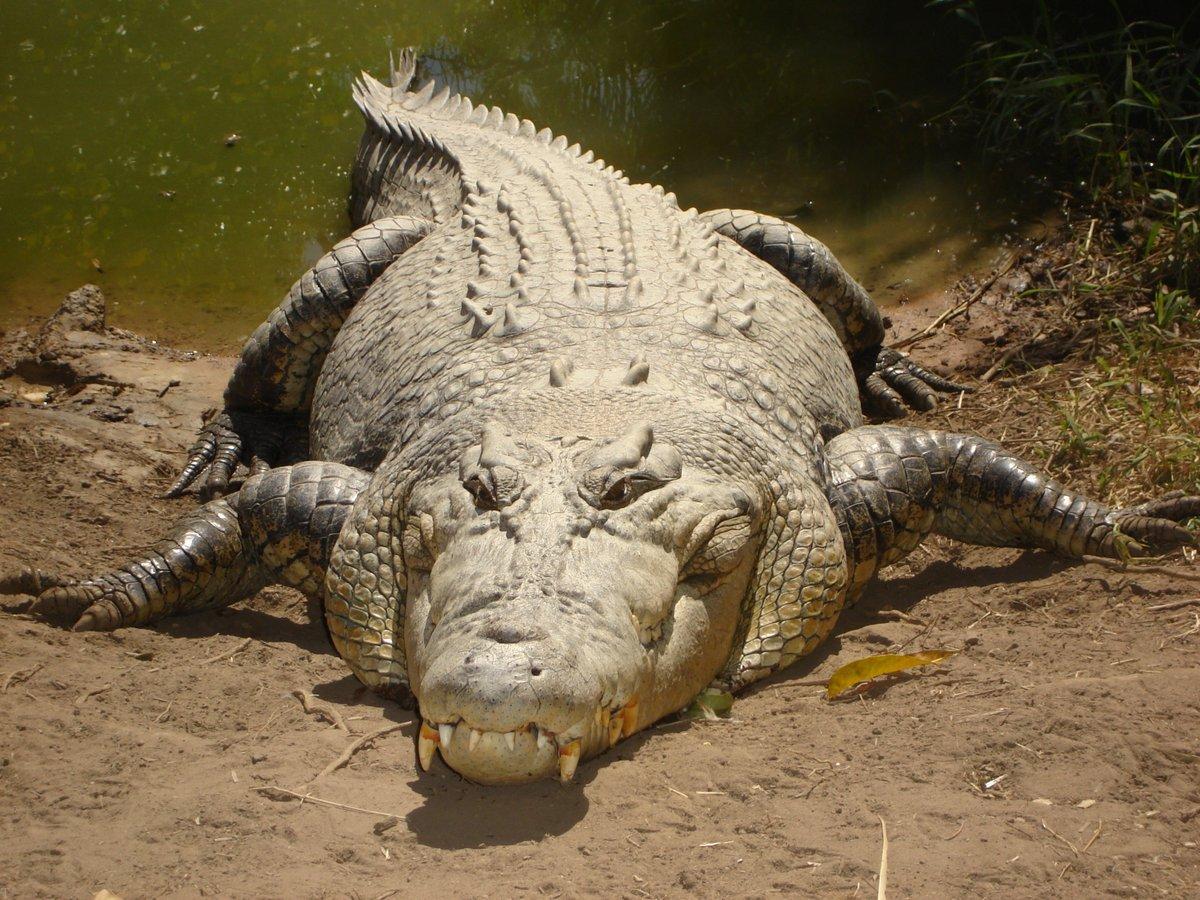دانستنی های علمی جالب درباره تمساح