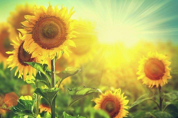 اس ام اس تبریک شروع فصل تابستان | متن درباره تابستان گرم