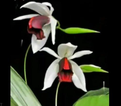 کلیپی زیبا از گلهایی که شاید کمتر در زندگی دیده باشید