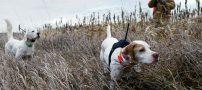 احکام شرعی مربوط به شکار با سگ شکاری