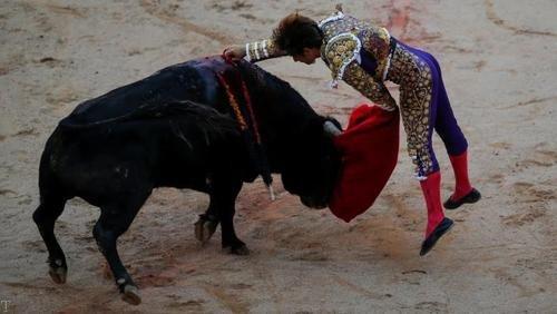 جشنواره هر ساله ای گاوهای وحشی در اسپانیا + تصاویر