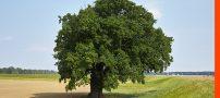 تعبیر خواب درخت و یا افتادن از درخت
