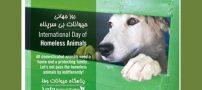 17 آگوست روز جهانی حیوانات بی خانمان است !