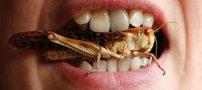 حکم شرعی خوردن حشرات مانند ملخ و …