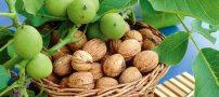 طریقه صحیح خشک کردن گردو و بادام تازه پوست سبز