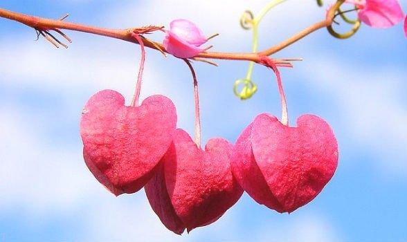 نکاتی برای تشخیص عشق واقعی + مراحل عشق + شرح انواع عشق