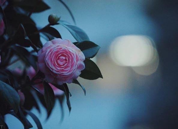 دکلمه های عاشقانه کوتاه   نوشته های عاشقانه کوتاه به همراه عکس