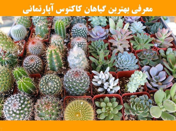 معرفی بهترین گیاهان کاکتوس آپارتمانی (کاکتوس کوچک تا بزرگ)