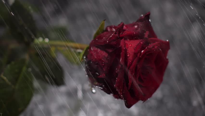 بهترین انشا زیبا درباره یک روز بارانی + انشاء درباره باران