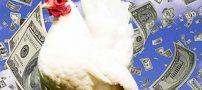 درامد زایی با پرورش مرغ