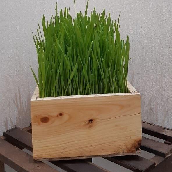 جدیدترین مدل سبزه عید نوروز ۱۳۹۹ | تزیین سبزه عید ۹۹