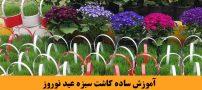 آموزش ساده کاشت سبزه عید نوروز