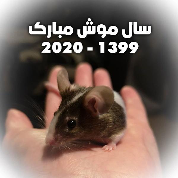 عکس پروفایل سال موش 1399 + پروفایل متولدین سال موش 2020