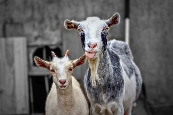 35 دانستنی مفید درباره جانوران