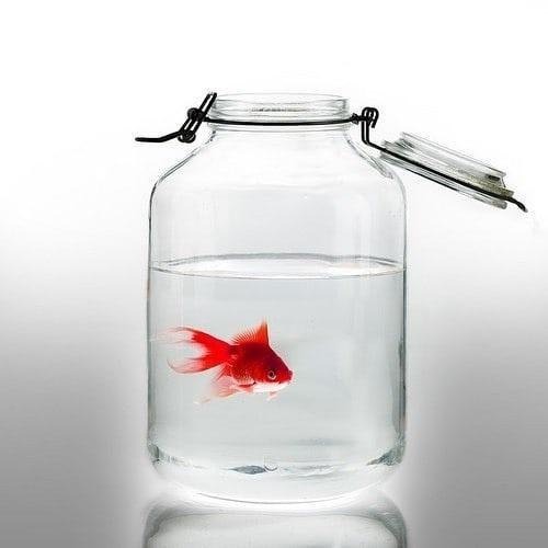 عکس پروفایل ماهی قرمز عید نوروز
