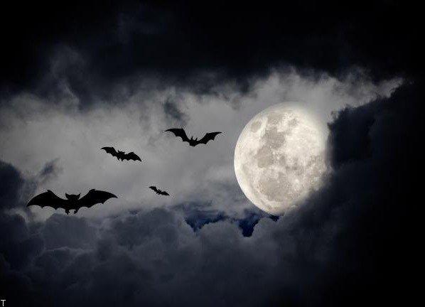تعبیر خواب خفاش | گرفتن خفاش | خفاش مرده