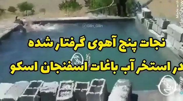 نجات 5 آهوی گرفتار شده در استخر آب توسط باغدار محترم (فیلم)