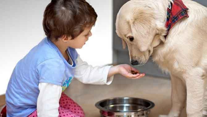 پت شاپ کت مت، دوستی و همراهی برای حیوان خانگی شما
