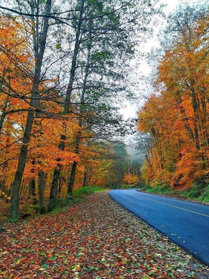 متن زیبا برای شروع و تبریک فصل پاییز