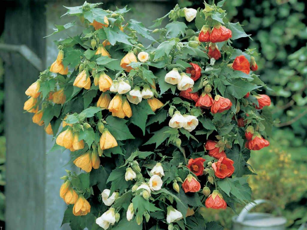 خرید گل های زیبا با قیمت مناسب بصورت انلاین