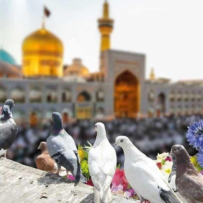 اس ام اس های تبریک میلاد امام رضا (ع) + عکس تبریک میلاد امام رضا (ع)
