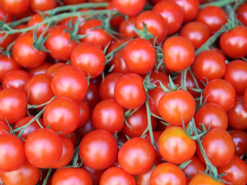 فواید گوجه فرنگی + مضرات گوجه فرنگی