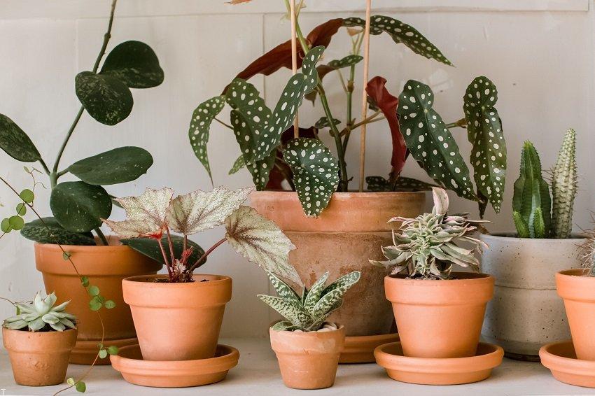 بهترین گیاهان آپارتمانی با شرایط نگهداری آسان