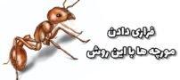 با این روش مورچه ها را فراری دهید