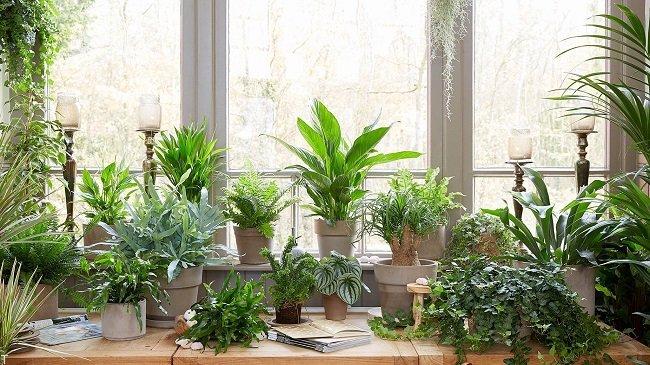 گیاهان سمی آپارتمانی خطرناک برای حیوانات خانگی شما