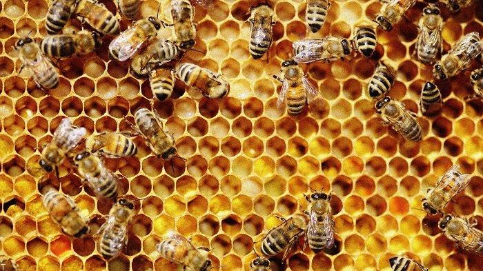 تشخیص عسل اصل و تقلبی با کبریت و تخم مرغ