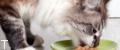 چه مقدار به گربه ی خود غذا دهید