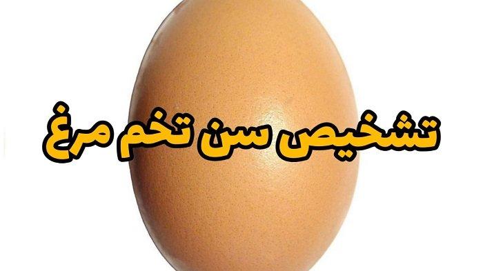 تشخیص سن تخم مرغ