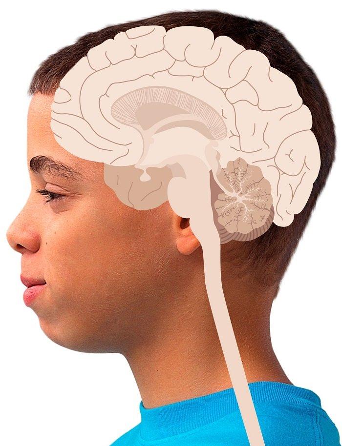 تغییرات جالب مغز از بدو تولد تا کهنسالی